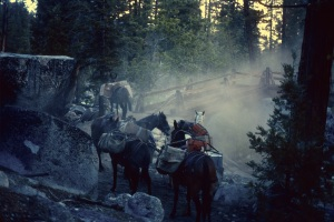 Mules with seismic gear decide to back off the bridge near the Kern Hot Springs, Sequoia National Park, 1988.